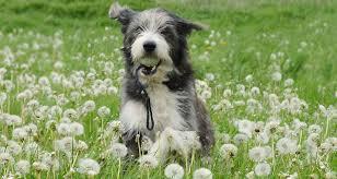 Kontrolliert darf ein junghund natürlich treppen steigen. Hundegesundheit Gesundes Altern Fangt Beim Welpen An