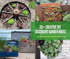 diy indoor and outdoor succulent garden