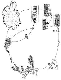 Life History Pattern