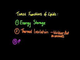 3 2 6 state three functions of lipids