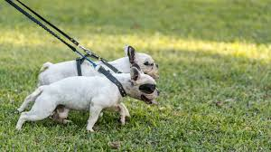 Puppies By Design Indiana Reviews 7 Best Inexpensive Dog Leashes According To Veterinarians