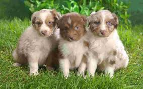 2 dog wallpapers free 2 dog cute puppies wallpapers