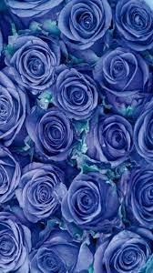 Blue Rose Plant (Page 1) - Line.17QQ.com