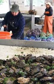 Image result for The U.S. west coast shellfish industry's perception of and response to ocean acidification : understanding an ocean stakeholder