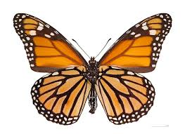 One adult movie butterfly position