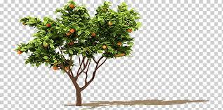 fruit tree orange branch orange fruit