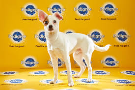 puppy bowl 2015 falcor. Unique Bowl That Makes Darby The  Throughout Puppy Bowl 2015 Falcor