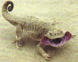 Животные и растения пустынь Экология Реферат доклад сообщение  Рис 132 Ящерица ушастая круглоголовка