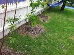 Using Trees To Save Money And Energy  HeartsGood Trees For Backyard