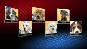 puppy bowl 2015 falcor. Interesting Bowl Puppy Bowl Throughout Puppy Bowl 2015 Falcor B