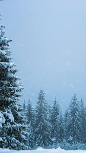Snowfall, winter, pine trees, nature ...