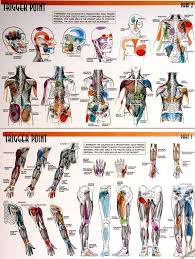 Trigger Points Check Out The Pdf Documents Associated With