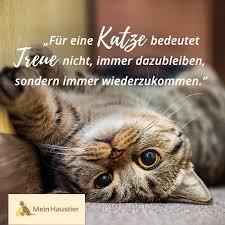 Katzenliebe Zitat Katzensprüche Sprüche Katze Katzen Und
