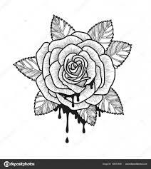 Růže Květ černobílý Vektorové Ilustrace Nádherná Růže Izolovaných