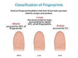 Most Common Fingerprint Pattern