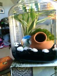 Decorative Betta Fish Bowls Best Bowl For Betta Fish Top 60 Live Plants For A Fish Tank Fish 23