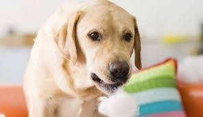 """Résultat de recherche d'images pour """"chien stress"""""""
