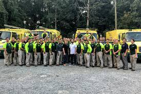 tree service and shrub care in the raleigh area