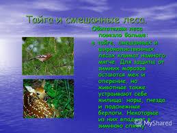 Презентация на тему РЕФЕРАТ ПО ФИЗИКЕ Термодинамика  8 Тайга
