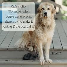 Lustige Katzen Und Hunde Zitate Und Sprüche Mit Niedlichen Fotos