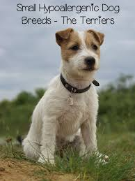best terrier breed for ratting