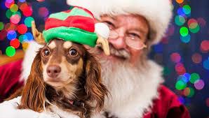 pet photos with santa near me 2020