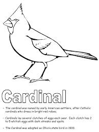 Kiwi Bird Coloring Page Kiwi Bird Coloring Page Kiwi Bird Coloring