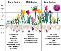 bulb flower types27