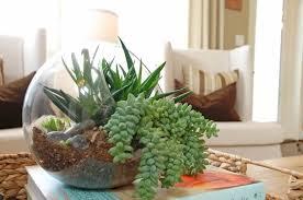 Decorative Terrarium Plants Inside Glass Container For Indoor Decor