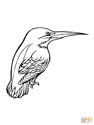 Small Picture Kingfisher Bird coloring page Free Printable Coloring Pages