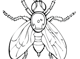 coloring page pages best images very popular u with firefly free printable