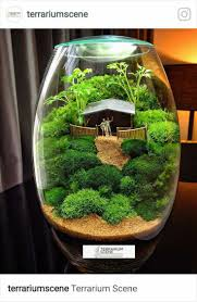 Bonsai Terrarium For Landscaping Miniature Inside The Jars 106 - DecOMG