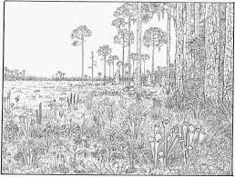 Printable Coloring Pages Nature Scenes With Free Waterfall Scene