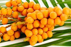 Orange Tree Leaves Stock Images RoyaltyFree Images U0026 Vectors Small Orange Fruit On Tree