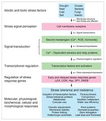 plant transcription factors involved in