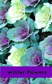 best time to plant annuals follow this garden chart for when to plant your flowers and