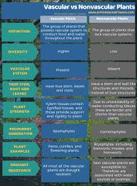 Venn Diagram Of Vascular And Nonvascular Plants Difference Between Vascular And Nonvascular Plants Compare