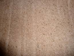 Small Beetles In Bedroom Carpet Beetle Infestation Got Bed Bugs And How To Get Rid Of