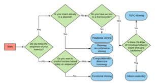 Functional Cloning Wikipedia