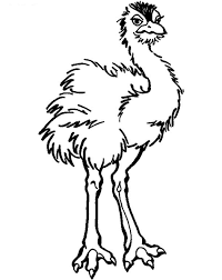 Small Picture Free Printable Ostrich Coloring Pages For Kids