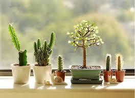 Small Picture Best 20 Mini cactus plants ideas on Pinterest Crochet art