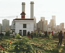 exploring the coolest rooftop farm in