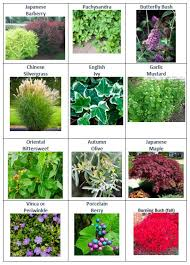 Union County Hosts Free Native Plant Giveaway for <b>Eco</b>-<b>Friendly</b> ...