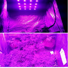10w led grow light chip cob full spectrum 380 840nm diy led grow light chip for growth a