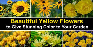 types of yellow flowers plants that