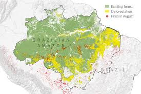 Which biome is this map showing the location of in light/lime green? What Satellite Imagery Tells Us About The Amazon Rain Forest Fires The New York Times