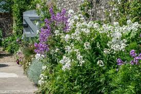 garden with these towering perennials