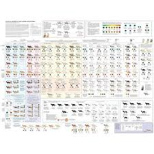 Cats Cat Markings Patterns Colors Poster 24inx36in Poster