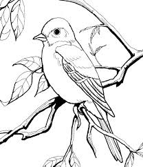 Small Picture 174 best Nature Study Birds images on Pinterest Nature study