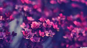Nature - Purple Flower background HD ...
